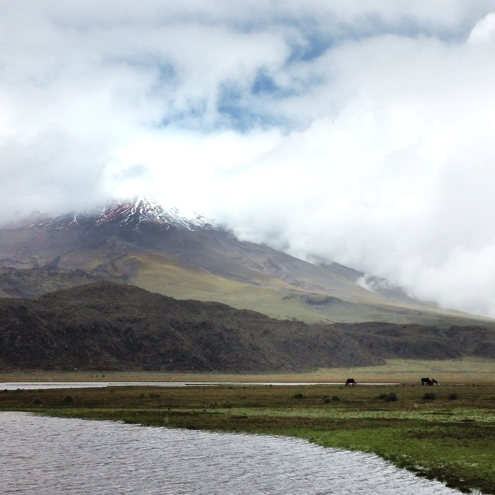 Cotopaxi and wild horses.