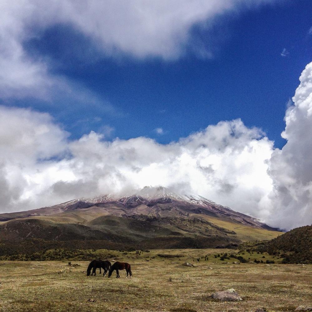 Ecuador6_07.JPG