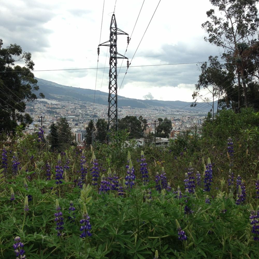 Ecuador8_09.JPG