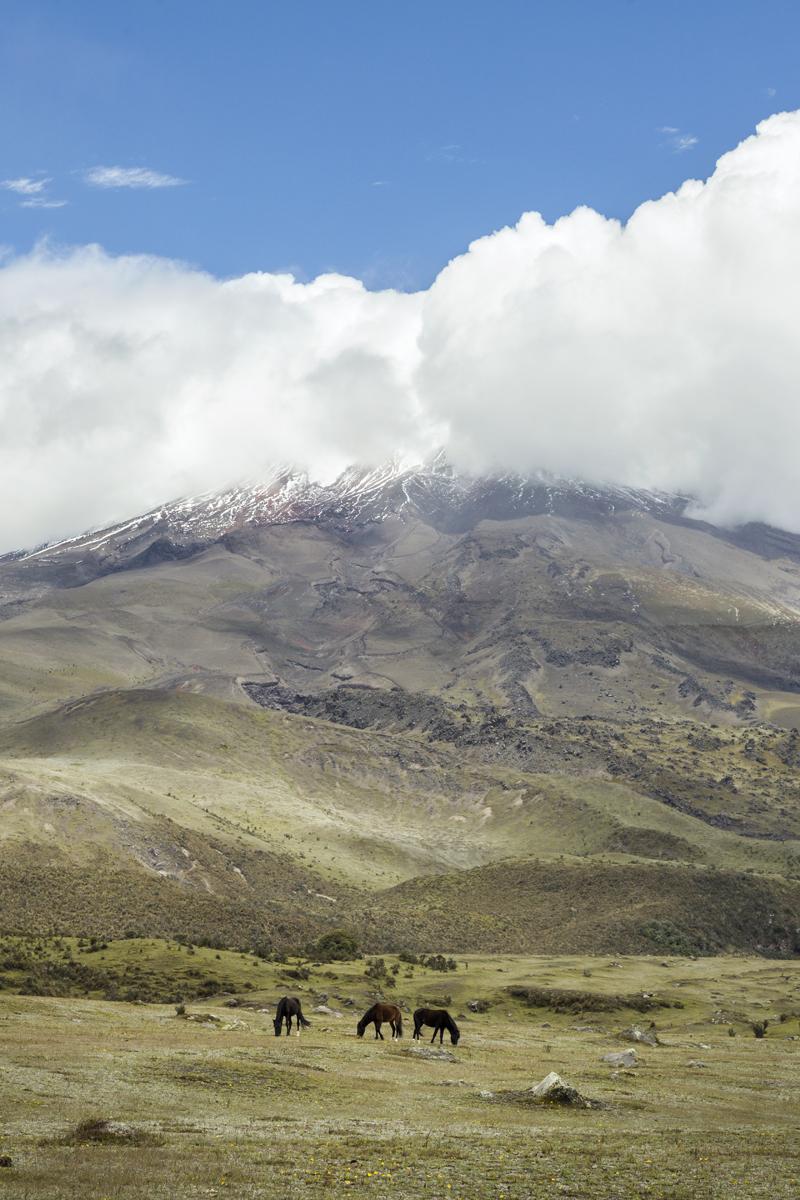 Ecuador_MK3_8072 as Smart Object-1.jpg