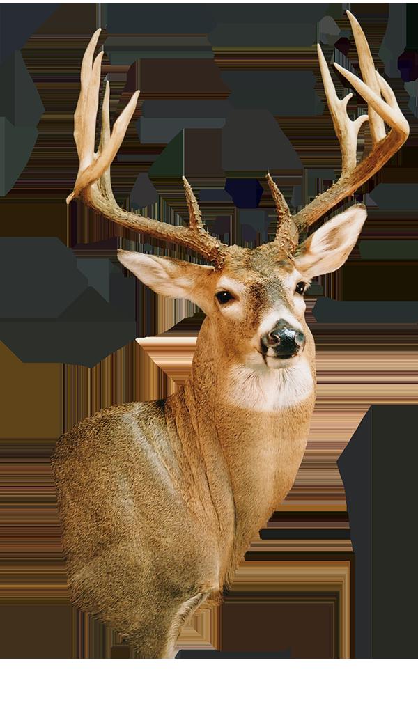 deer600.png