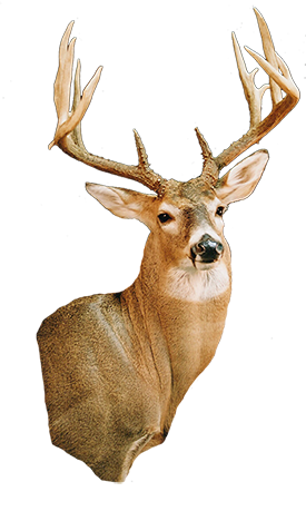 deer275 copy.png
