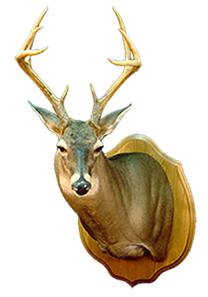 deer300_png_gallery_link_to_pic4 copy copy.png