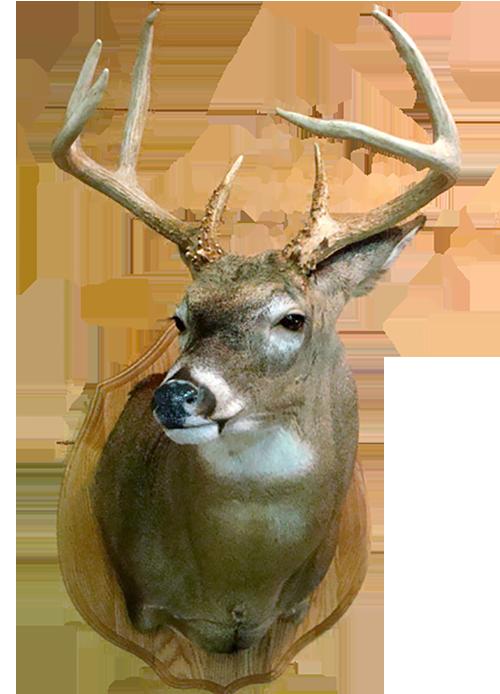deer500a.png