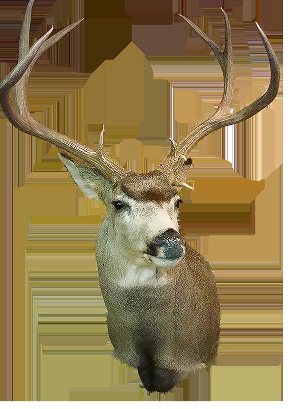 deer 800.png