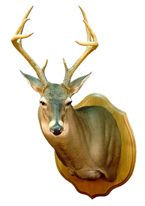 deer 600.png
