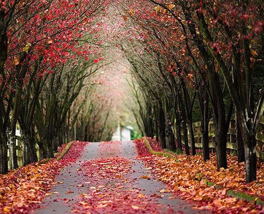 fall-scene_her-white.jpg