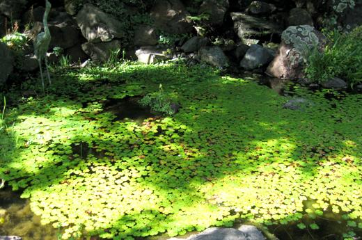 ferrari-gardens.jpg