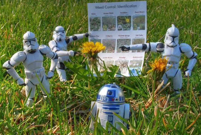 star-wars-weed-control.jpg.662x0_q70_crop-scale.jpg