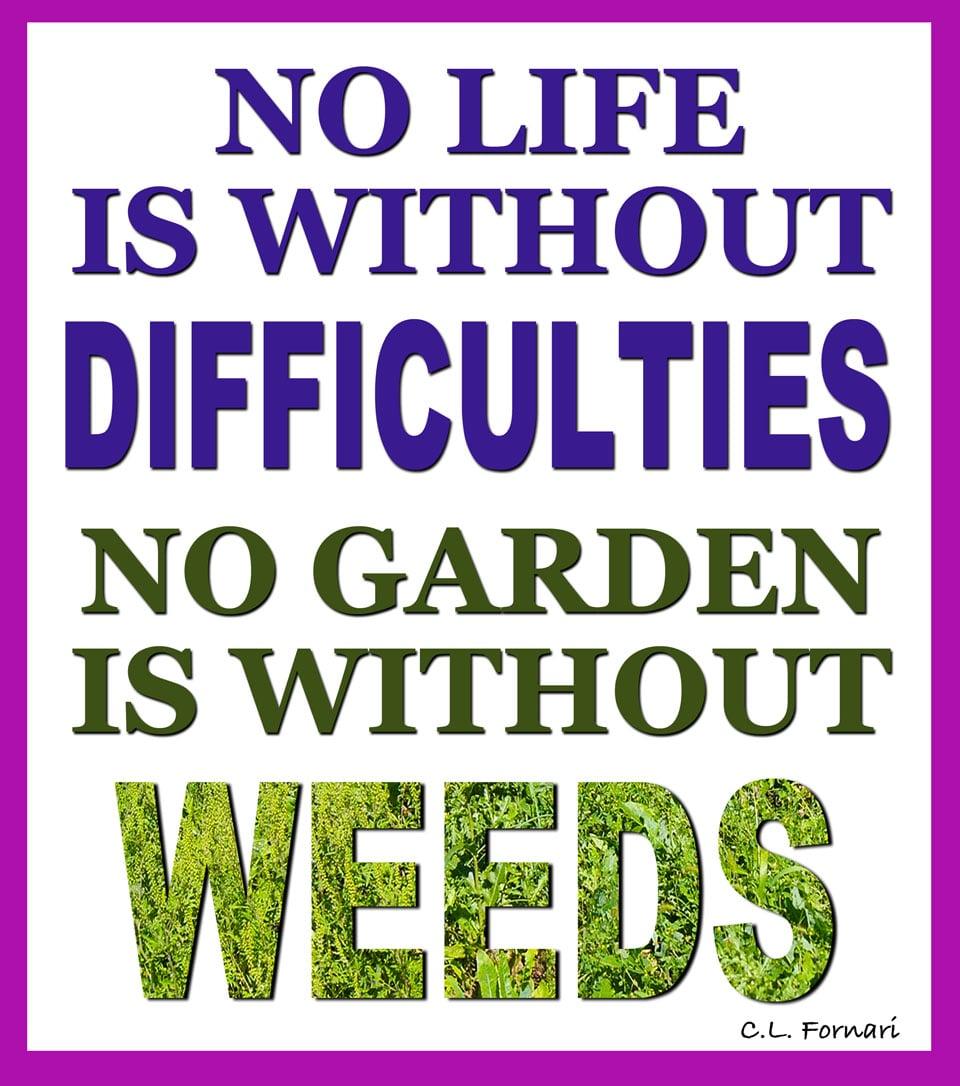 life_weeds.jpg