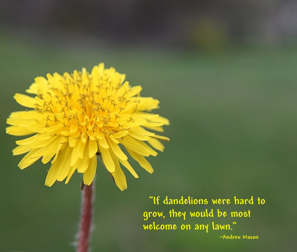 Dandelion and Quote.jpg