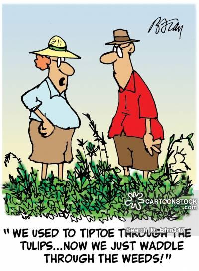 gardening-garden-gardener-tiptoe-weed-tulip-bfrn347_low.jpg