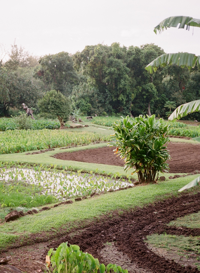 kauai-film-photographer-039.jpg