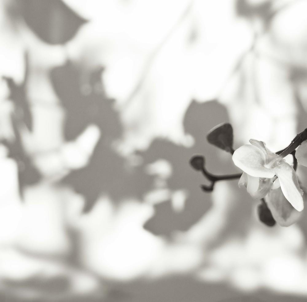 orchid shadowA4.jpg