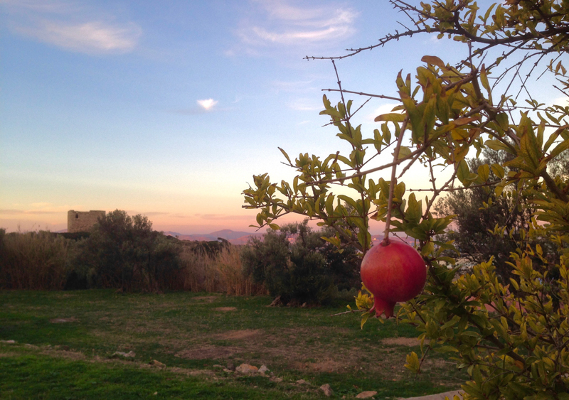 Paros Morning Pomegranate