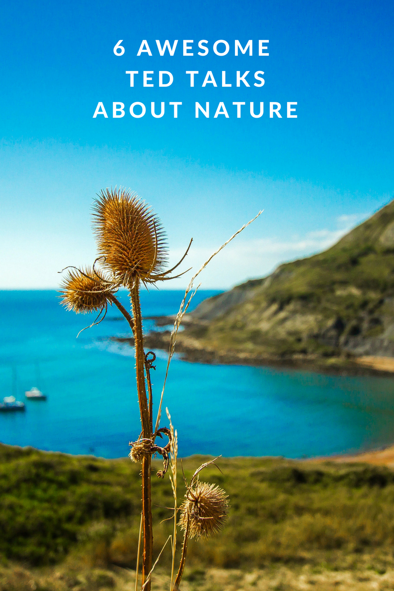 6 Awesome TED Talks About Nature. Explore the natural world!