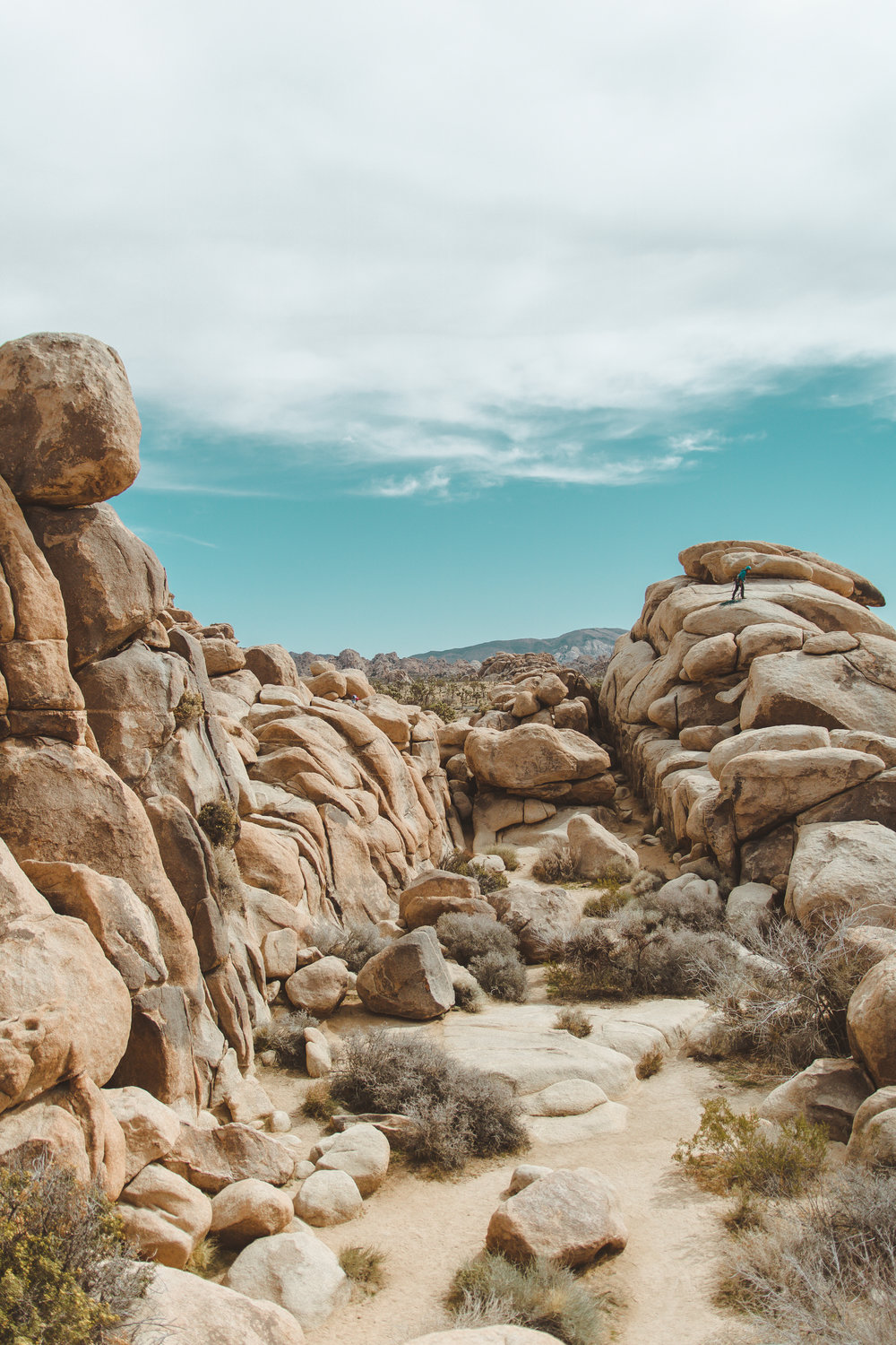 10 Reasons You Should Visit Joshua Tree