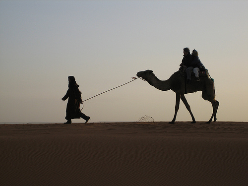 by trevorappleton
