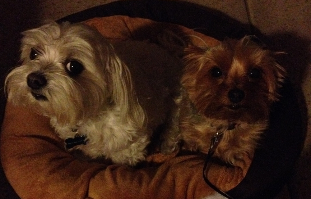 My much adored doggies, McCall and Stella.