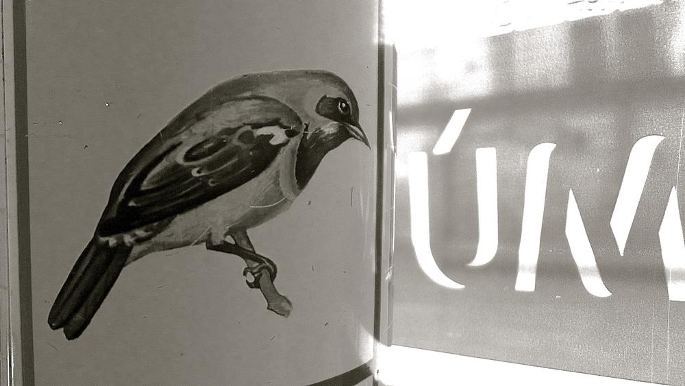 Mù chos  pájaros - 2
