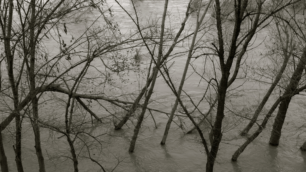 Árboles Ebro desbordado