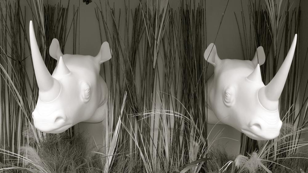Búfalos rinocerontes - 2