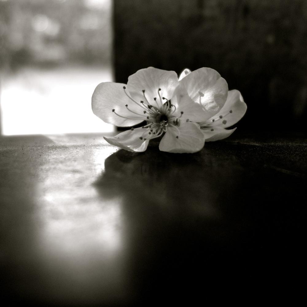 Pequeña flor - 3