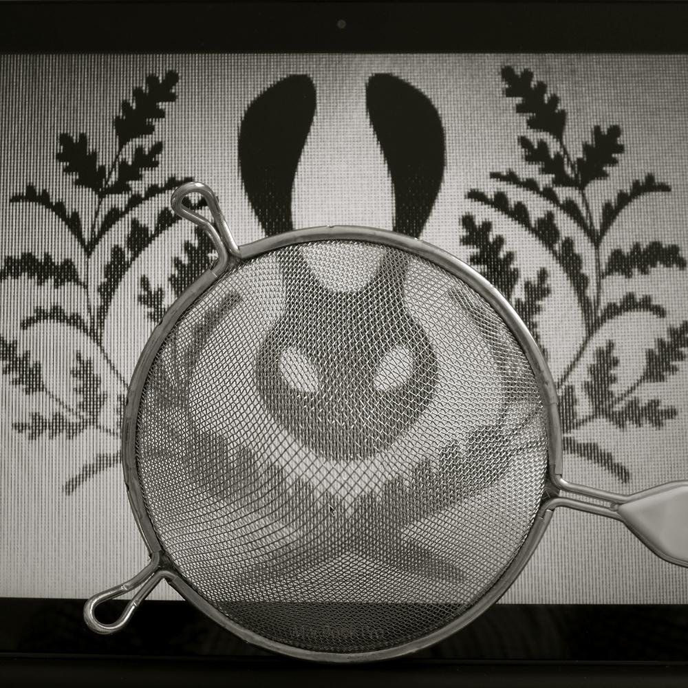 Conejo colado