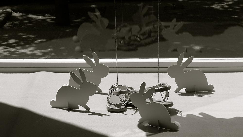 Conejo calzado