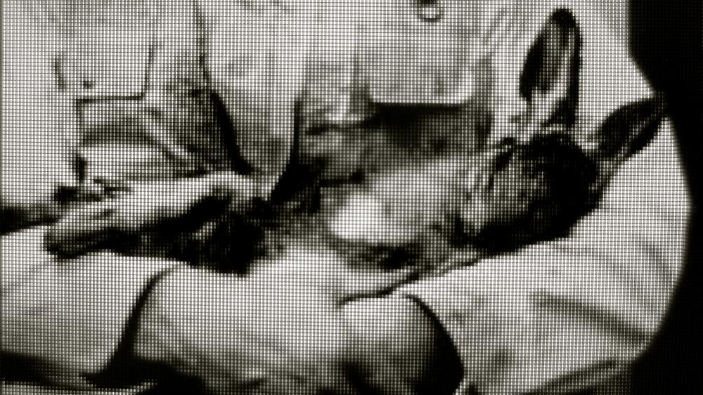 Beuys y la liebre - 1
