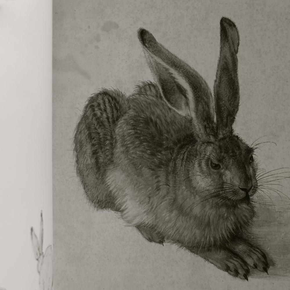Conejo de Durero