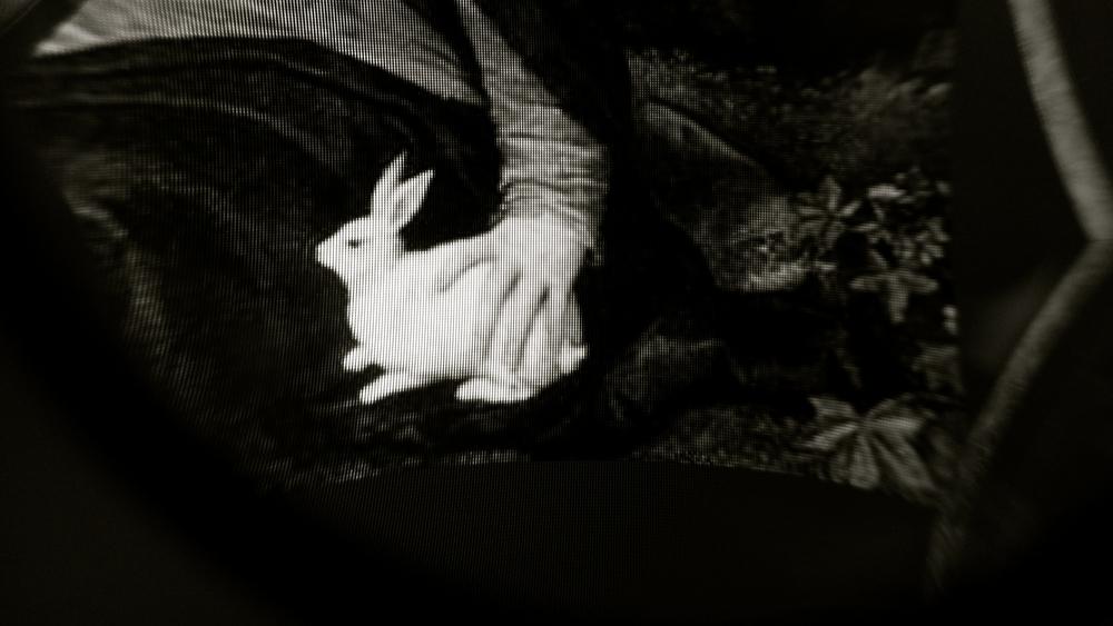 Conejo de Tiziano