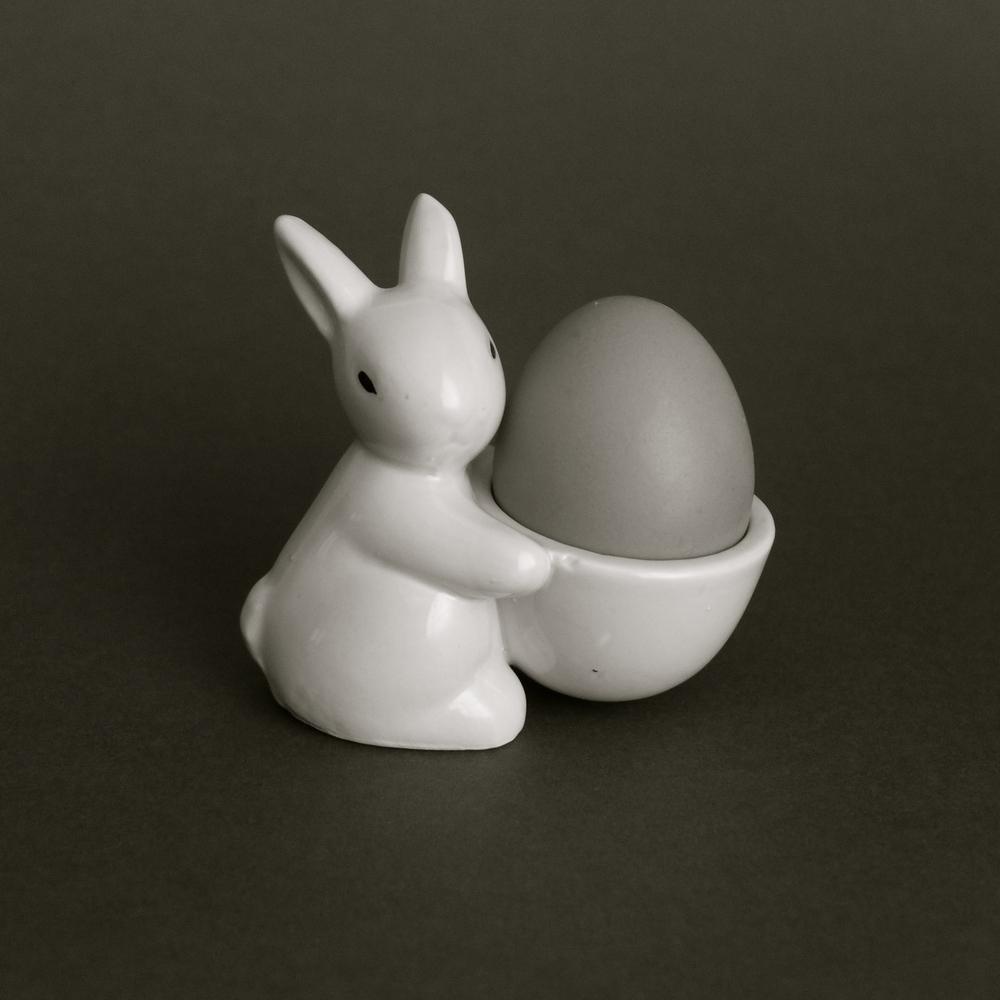 Conejo gallina