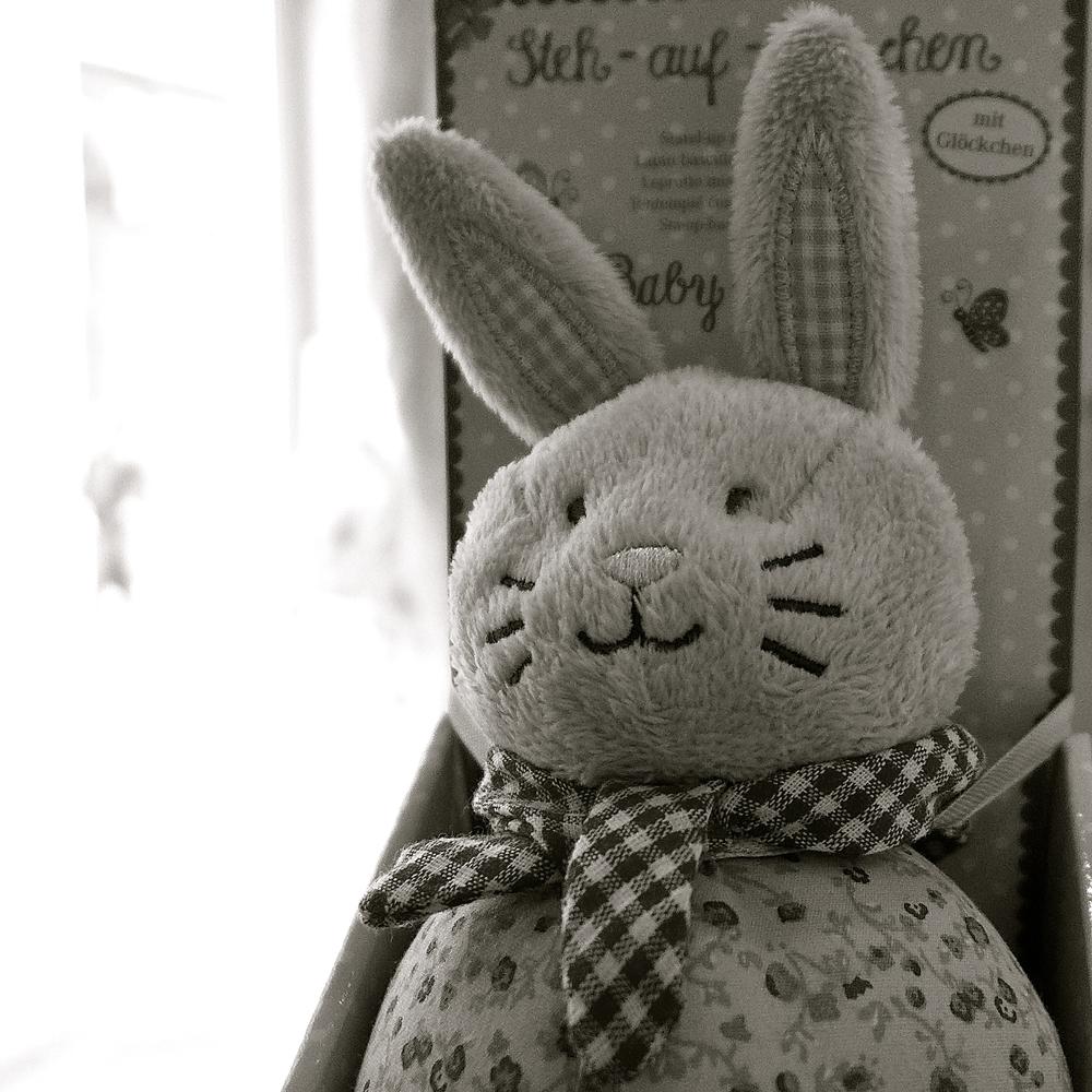 Conejos Carpe Diem - 4