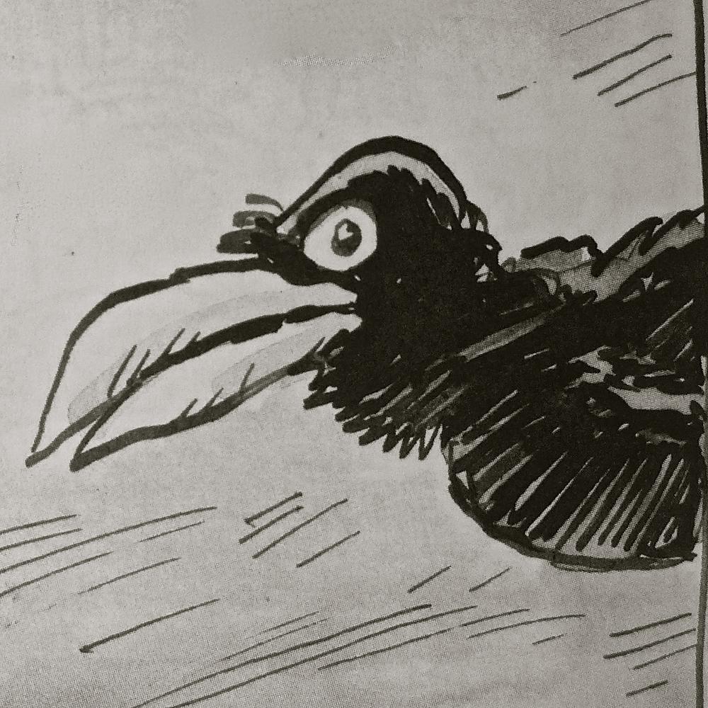 Cuervo de Azagra