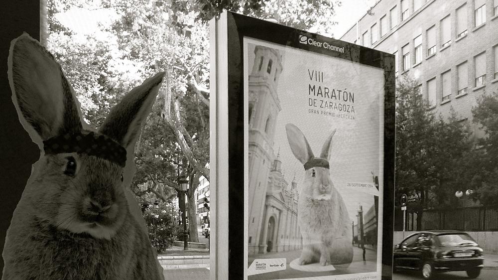 Conejo Maratón VIII