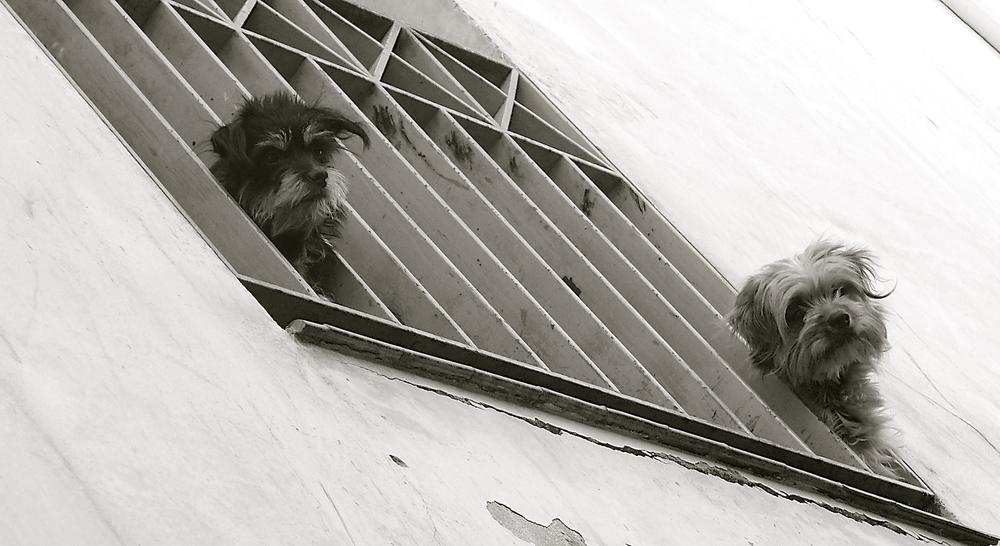 Dos perrillos