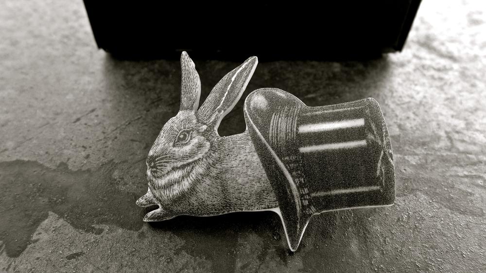 Conejo Saltodepulga - 02
