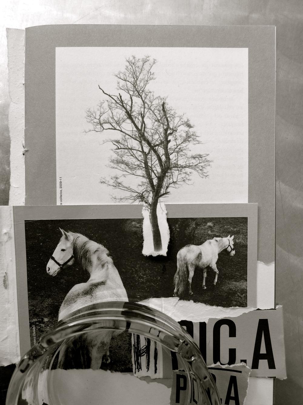 Hípica  collage Colectivo rasga y pega - 1