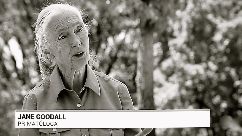 Jane Goodall primatóloga