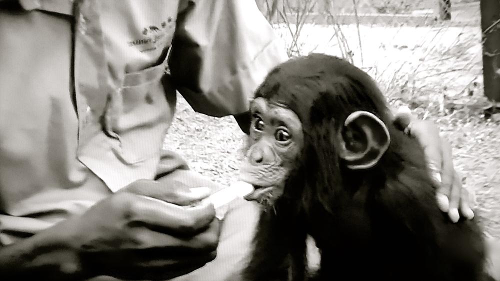 Jane Goodall primatólog mono