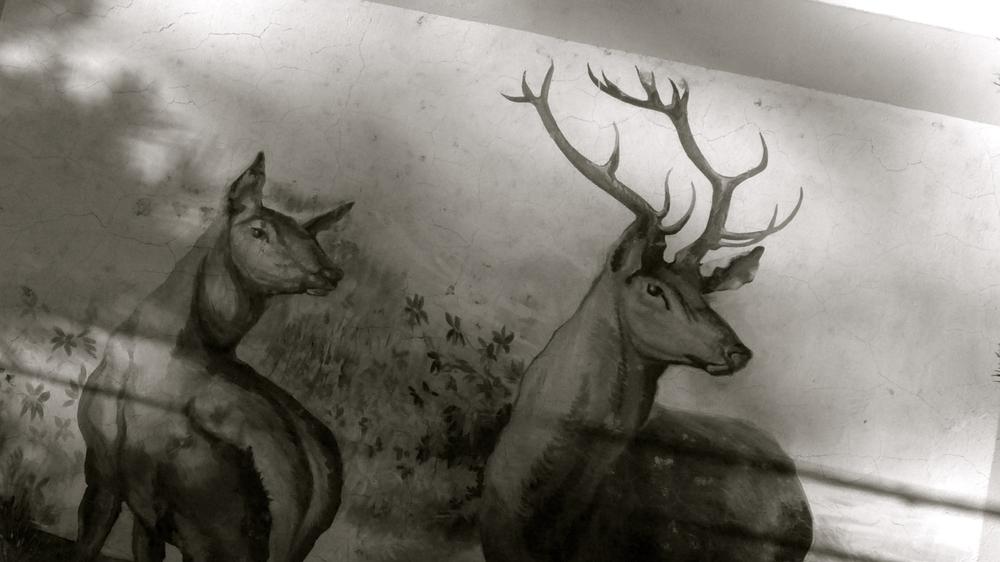El ciervo Bronchales - 2