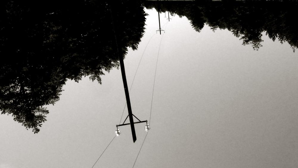 Postes electricidad bosque - 1