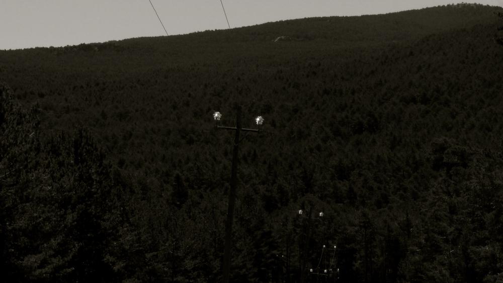 Postes electricidad bosque - 2