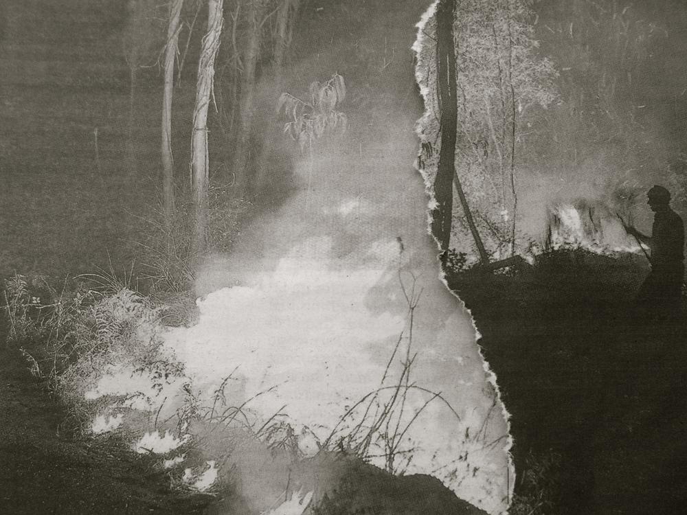 Incendio en el bosque fotodfoto