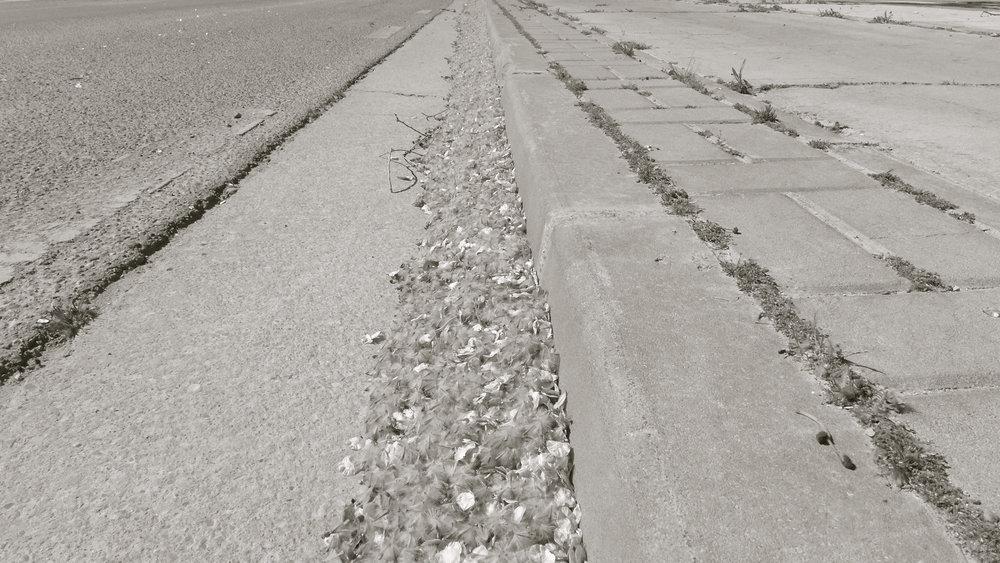 Autopista de semillas - 1