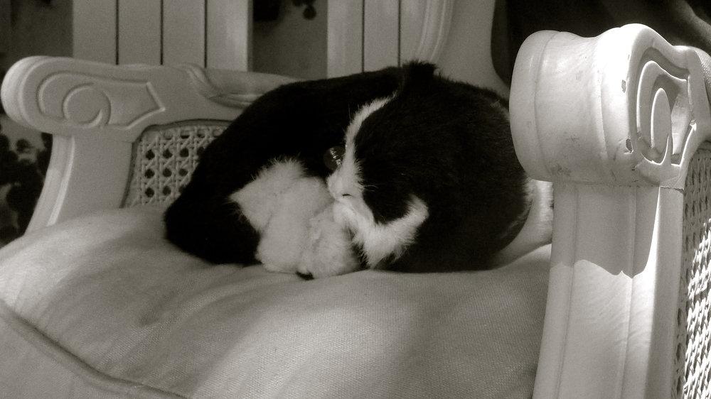 Peluche gato sillón