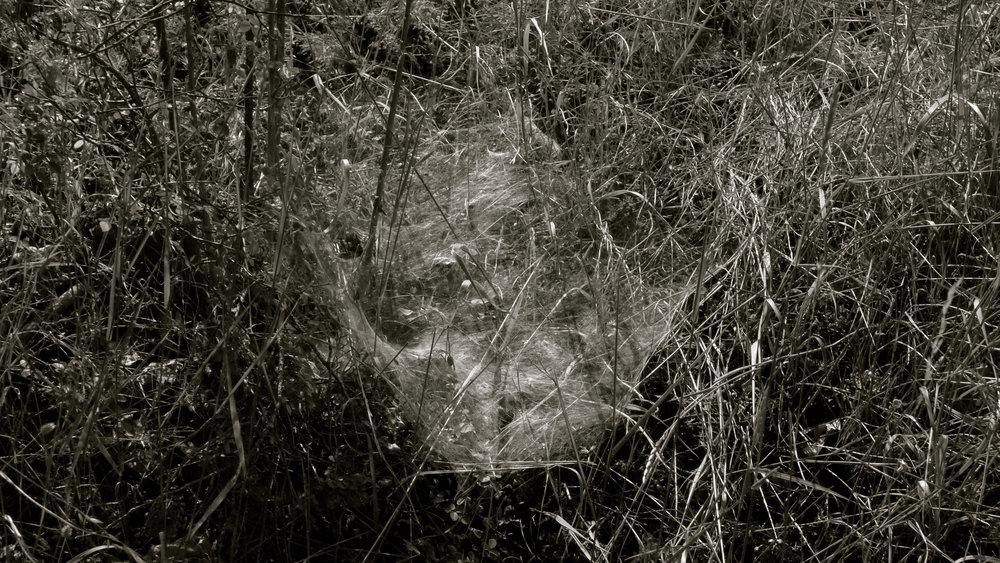 Tela de araña redonda