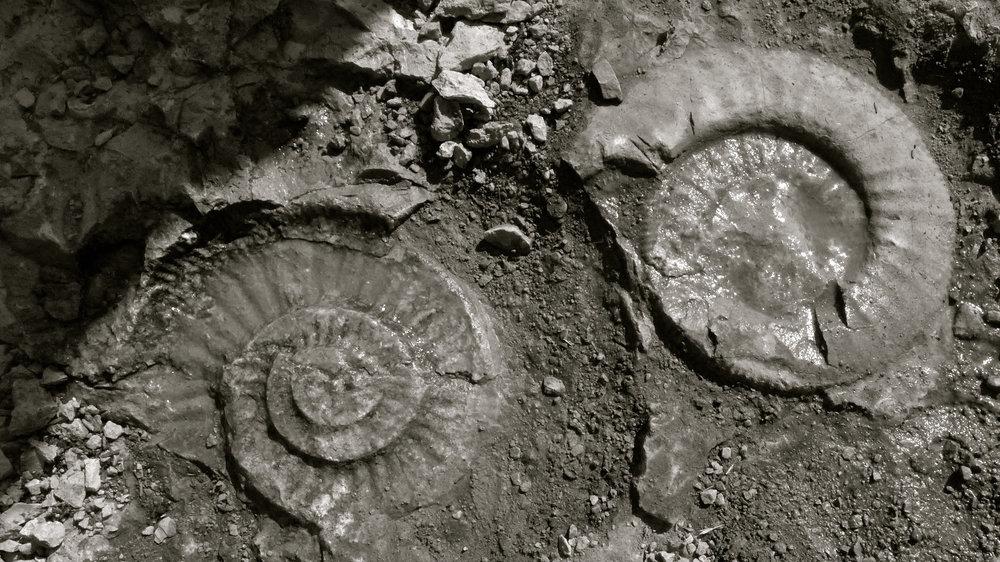 Fósiles dolina - 2