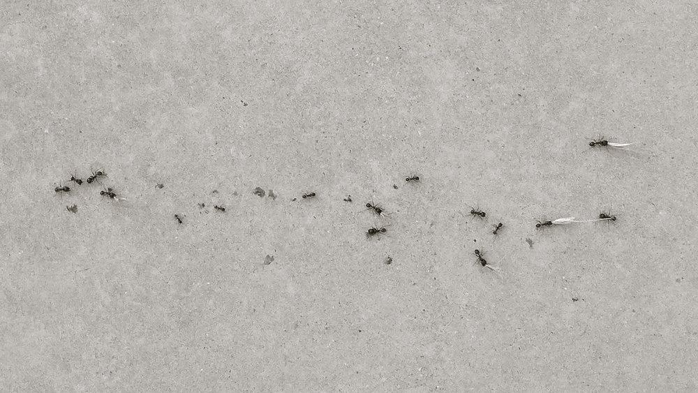 Hormigas 2